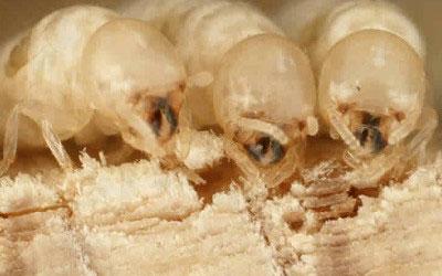 Termite-Gallery-5