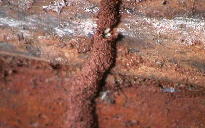 Termite-Gallery-9